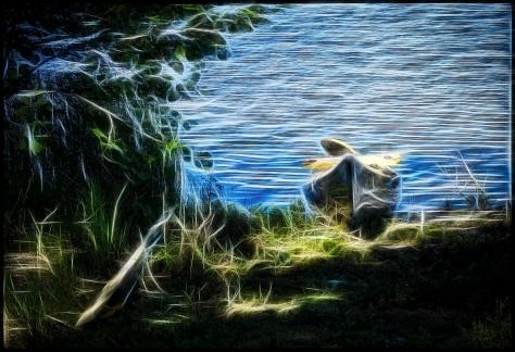 Vanerpaddel-Viklund-82