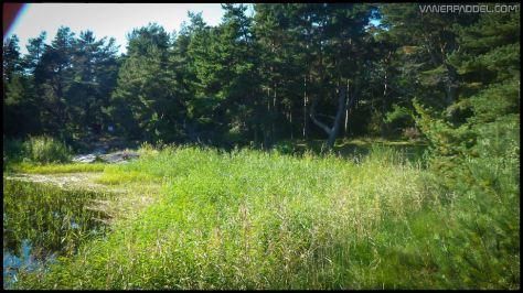 Vanerpaddel Lurö 20140904-011