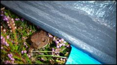Vanerpaddel Lurö 20140904-028
