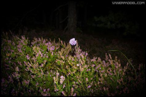 Vanerpaddel Lurö 20140904-030