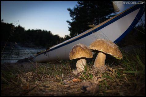Vanerpaddel Lurö 20140904-031