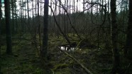 The wild woods in Dalsland