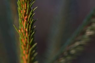 Viklund_WR-80_Snapseed