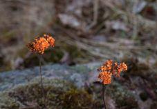 Viklund_WR-84_Snapseed