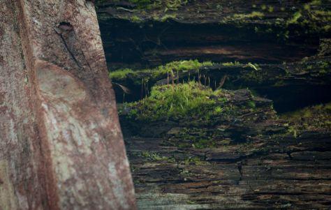 Vanerpaddel Viklund_48-44