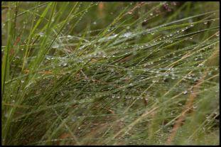 Viklund_01-52_Snapseed