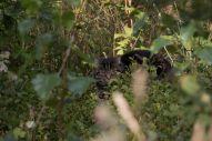 Vanerpaddel Viklund_84-111