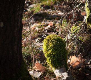 Lichen on a birch. :)